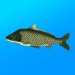True Fishing. Fishing Simulator